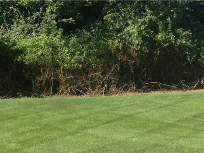 backyard-after