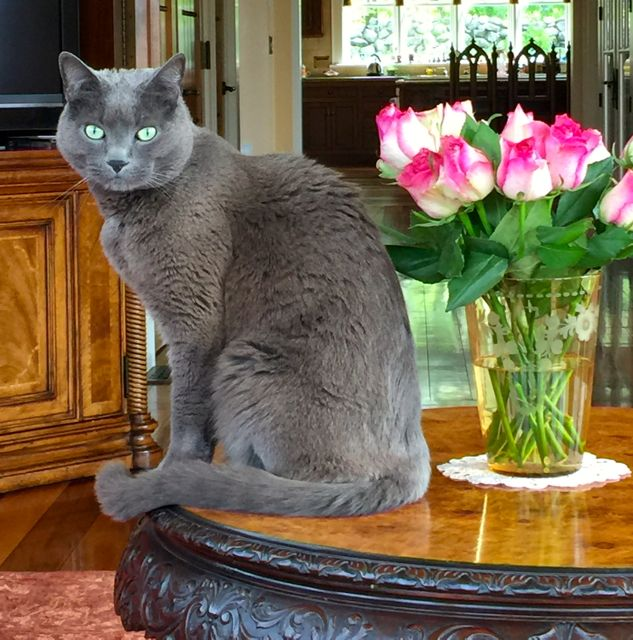 poupon, table, flowers